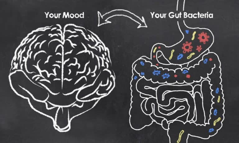 gut health importance