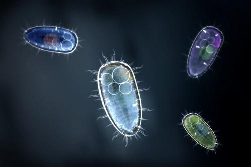 stomach parasites symptoms
