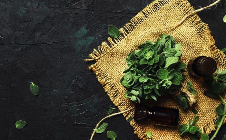 oregano oil for health