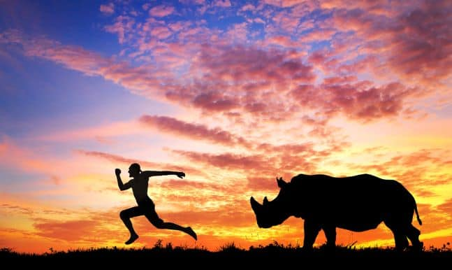 adaptogens and adrenal fatigue - running from rhino